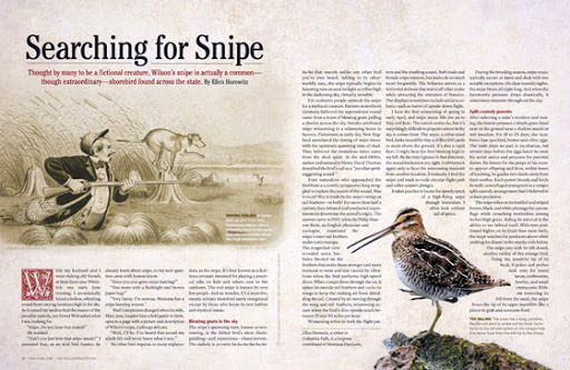 This image has an empty alt attribute; its file name is snipe-watching.jpg
