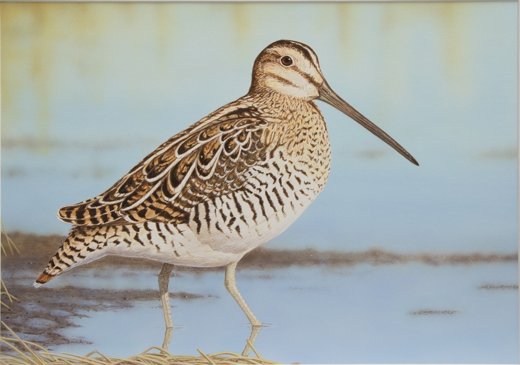 This image has an empty alt attribute; its file name is snipe.jpg